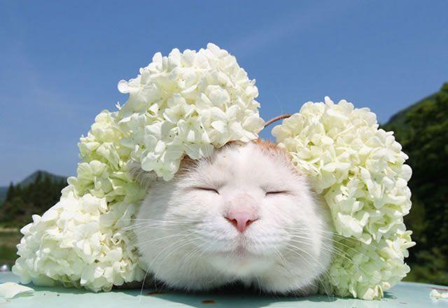 gato Shironeko (21)