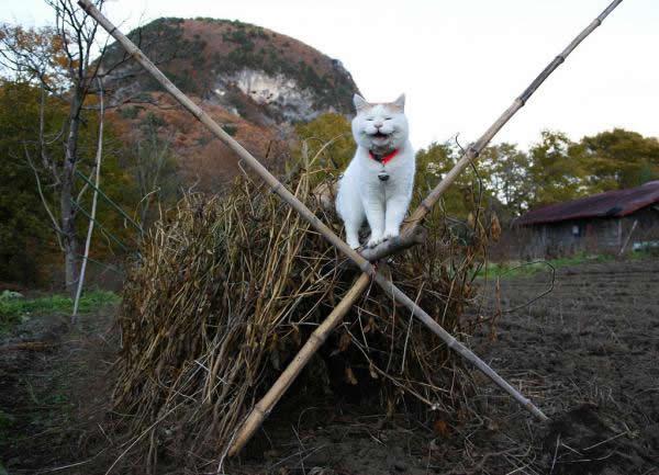 gato Shironeko (7)