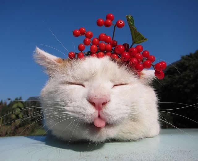 gato Shironeko (10)