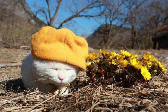 gato Shironeko (18)