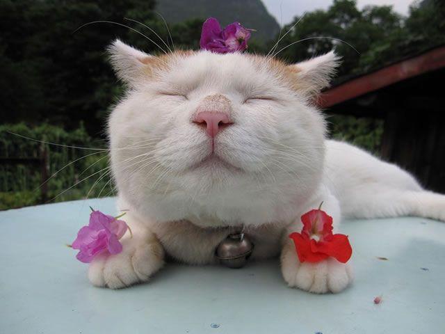 gato Shironeko (17)
