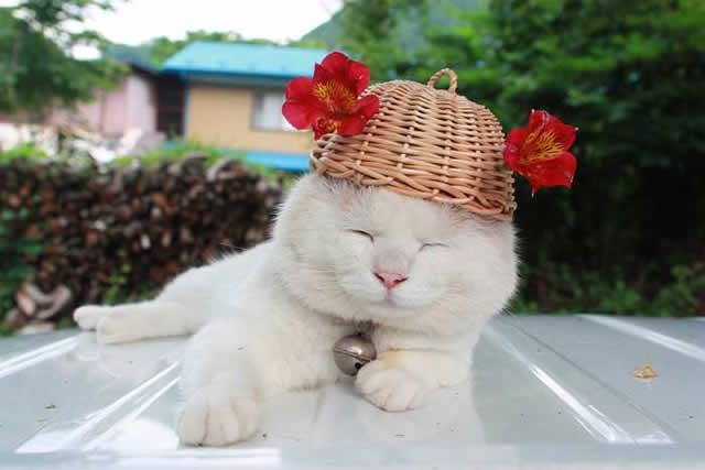 gato Shironeko (13)