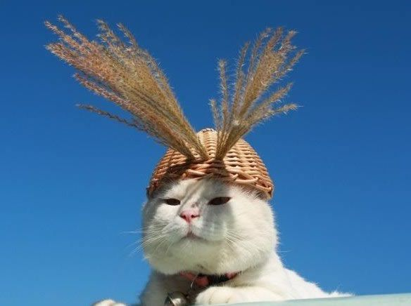 gato Shironeko (24)