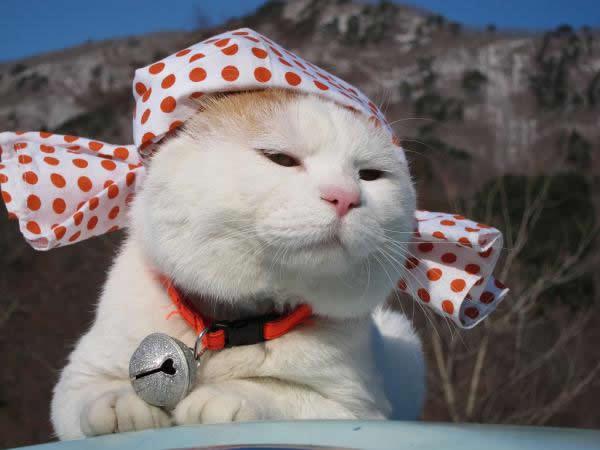 gato Shironeko (16)