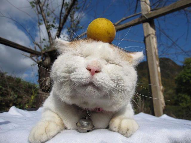 gato Shironeko (25)