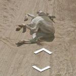 Google atropella a un burro en Botsuana