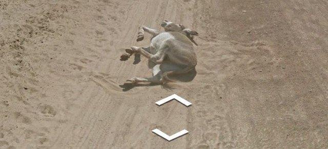 burro atropellado