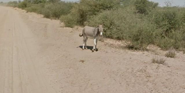 burro google