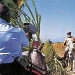 El Sonora burros y caballos pagan tenencia