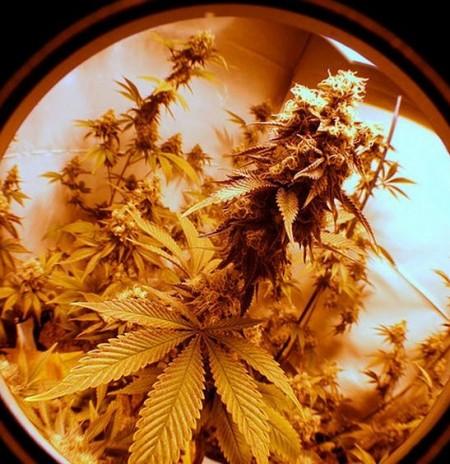 marihuana casa