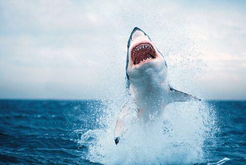 ataque tuburon