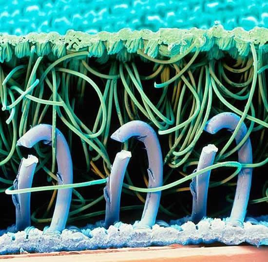 nylon microscopio