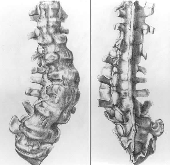 columna Mantell