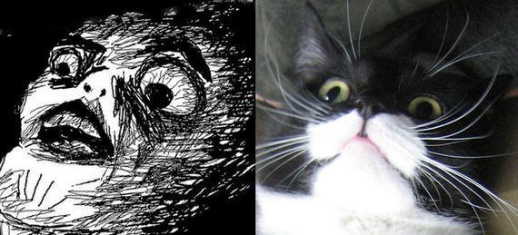 gatos rage comics (17)