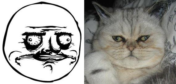 gatos rage comics (14)