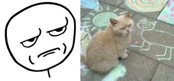gatos rage comics (11)