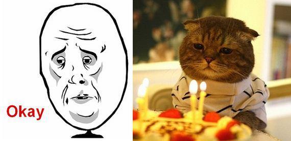 gatos rage comics (7)