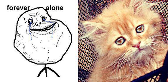 gatos rage comics (6)