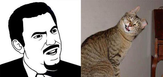 gatos rage comics (3)