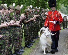 10 animales con increíbles carreras militares