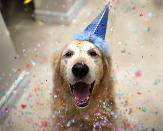 Champ perro muy feliz (4)