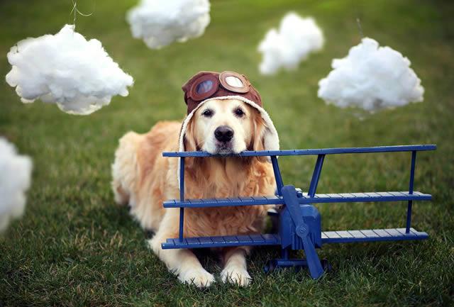 Champ perro muy feliz (3)