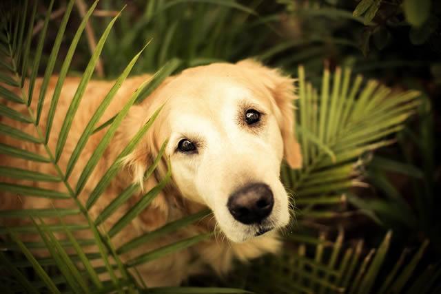 Champ perro muy feliz (1)