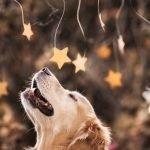 Conoce a Champ, un perro muy feliz