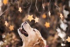 Champ perro muy feliz (10)