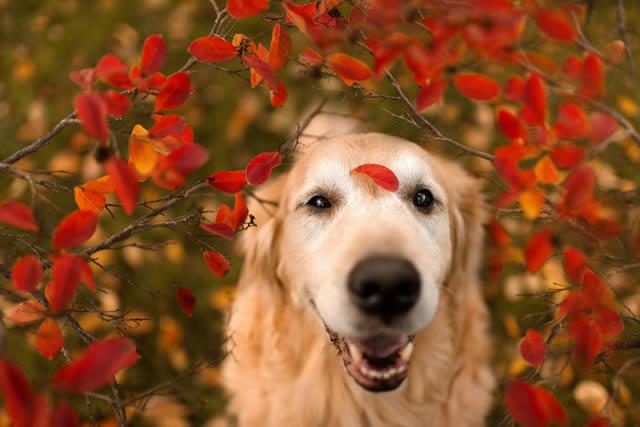 Champ perro muy feliz (9)