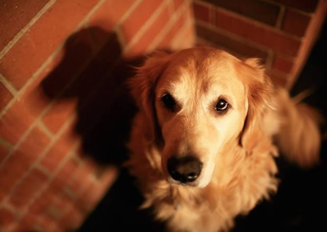 Champ perro muy feliz (8)