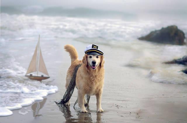 Champ perro muy feliz (6)