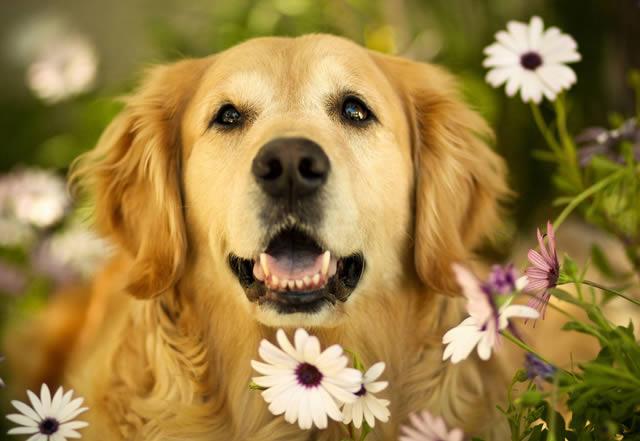 Champ perro muy feliz (11)