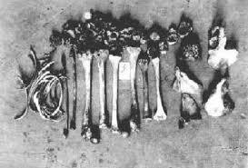 huesos en el río Leine