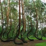 Crooked Forest, bosque curvado en Polonia