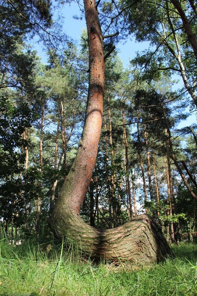 misterioso bosque curvado (8)