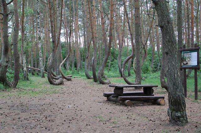 misterioso bosque curvado (7)