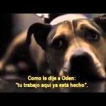 Los últimos momentos con Oden