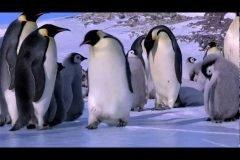 Fails de Pingüinos