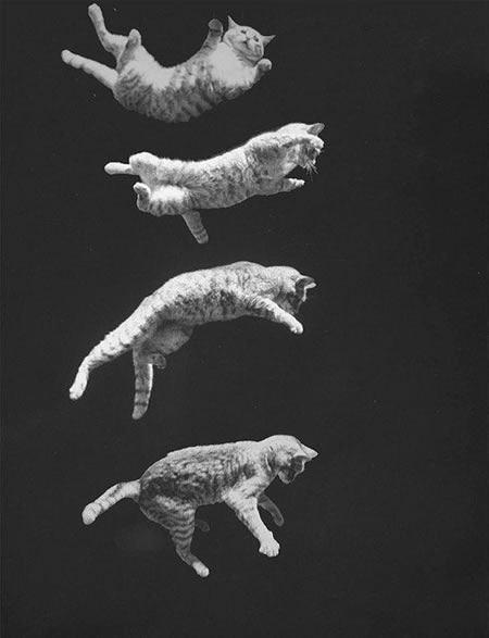 caida gato