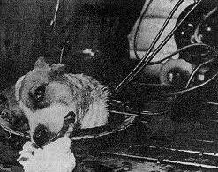 cabeza perro Bryukhonenko