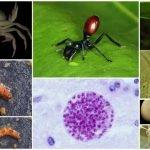 parasitos manipuladores