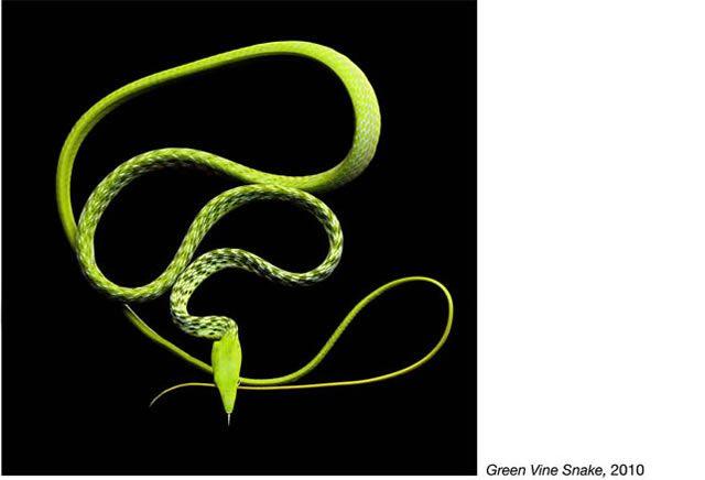 fotos serpientes - Serpentine Mark Laita (16)