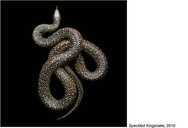 fotos serpientes - Serpentine Mark Laita (13)