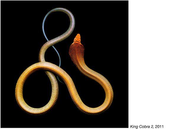 fotos serpientes - Serpentine Mark Laita (4)