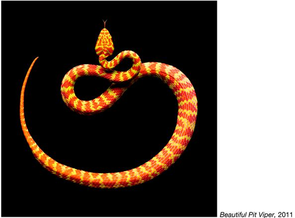 fotos serpientes - Serpentine Mark Laita (9)