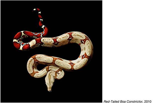 fotos serpientes - Serpentine Mark Laita (1)