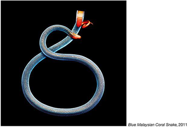 fotos serpientes - Serpentine Mark Laita (25)