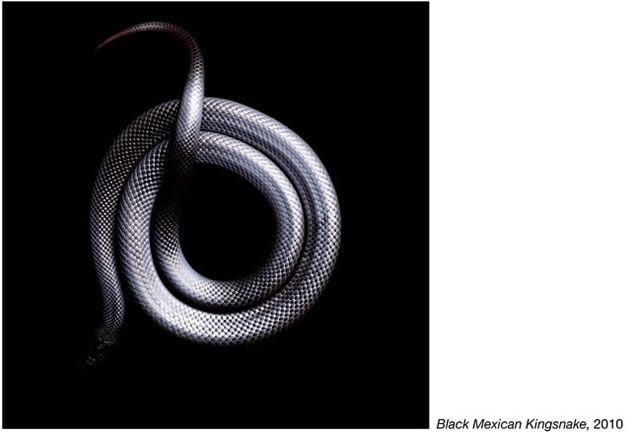 fotos serpientes - Serpentine Mark Laita (22)