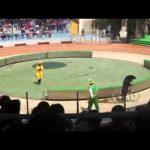 Monos y un oso en una carrera de ciclismo